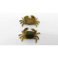 Силиконовая приманка Strike Pro Краб Finesse Crab olive crab